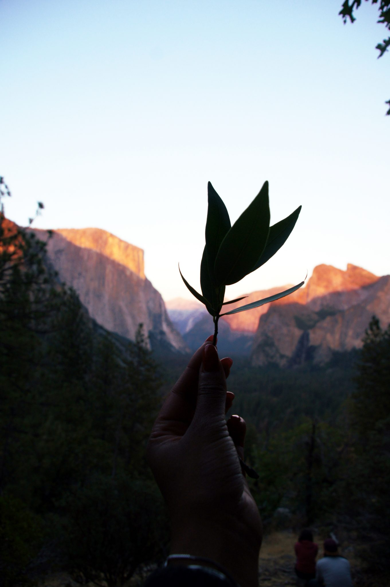 me holding up a leave in the Yosemite national park