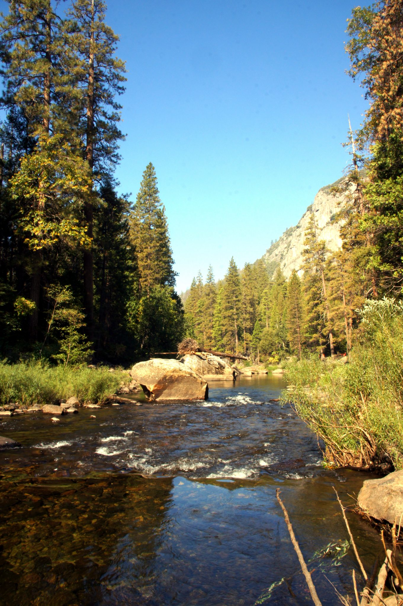 picture of a river in the Yosemite national park